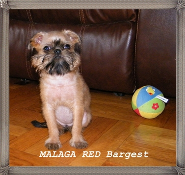 Malaga Red Bargest (118K)